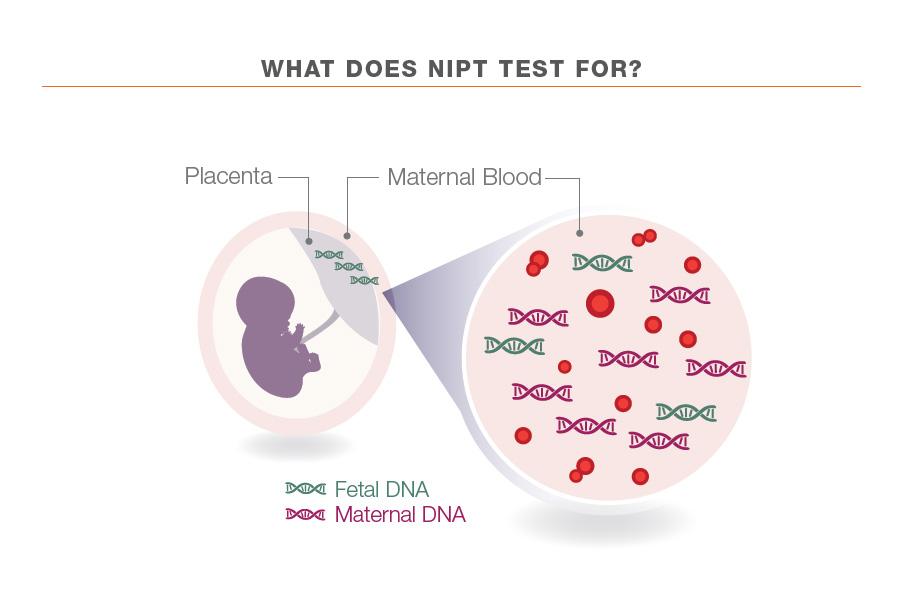 Non Invasive Prenatal Testing Nipt Quantum Diagnostics